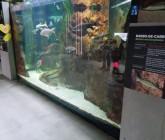 Mora River Aquarium, Flúviario de Mora, in Mora